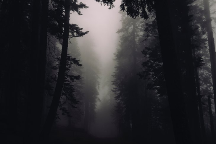 Gray and foggy forest